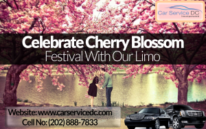Limo Service Phoenix_cherry Blossom Festival