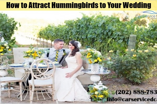 How to Have a Hummingbird Wedding